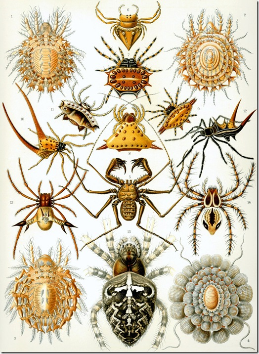 Haeckel_Arachnida (FILEminimizer)