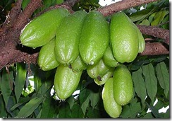 Bilimbi