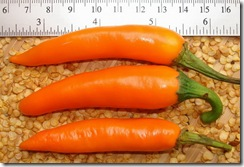 Pepper Thai Carrot