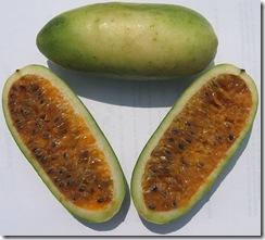 Passiflora tarminiana