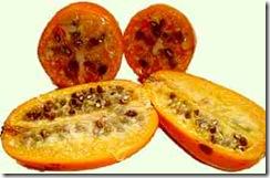 Jaracatia spinosa