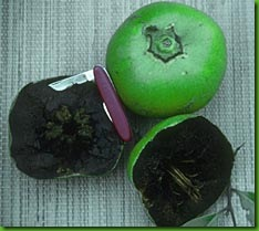 Black Sapote