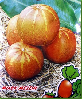 Musk Melon Thai