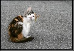 Kitty_Orange_by_juning