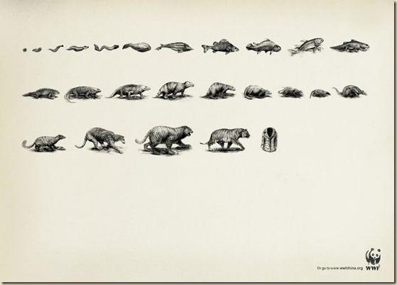 evoluciondeltigre