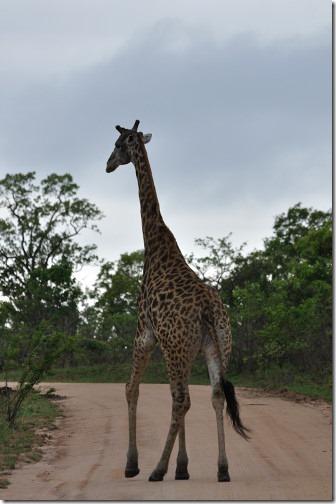 25 Africa 076