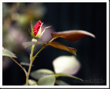 2011 04 28 _MG_1376w