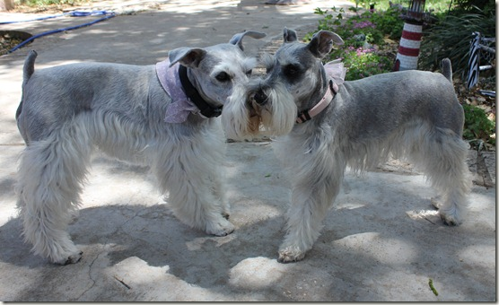 Oscar and Gracie1 042