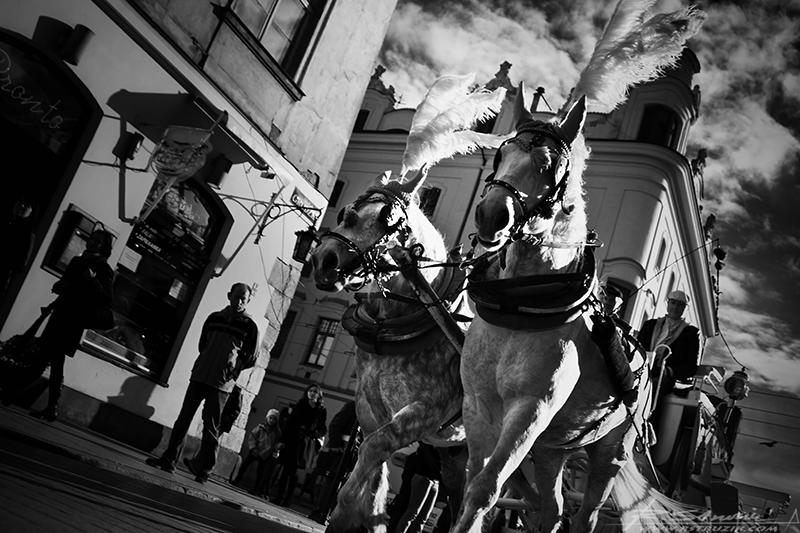 Kraków, ul. Grodzka. Rytm miasta wyznaczany rytmem kopyt.