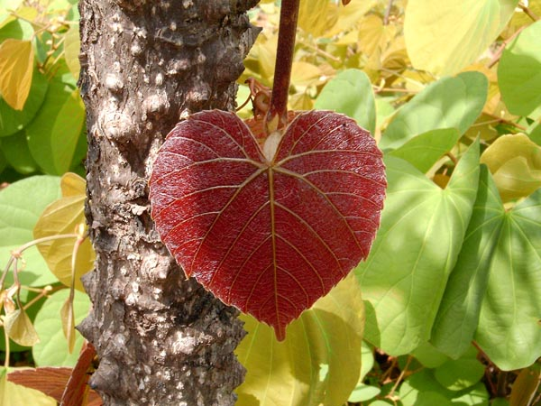 Love Is In The Air, Love Is In Nature