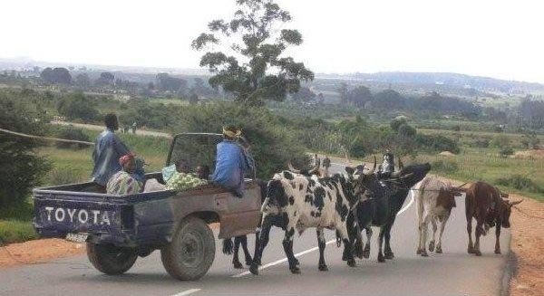 Weekend Fun - Funny things of Africa - The all new Toyota Corolla or the all new Toyota Cowrolla?
