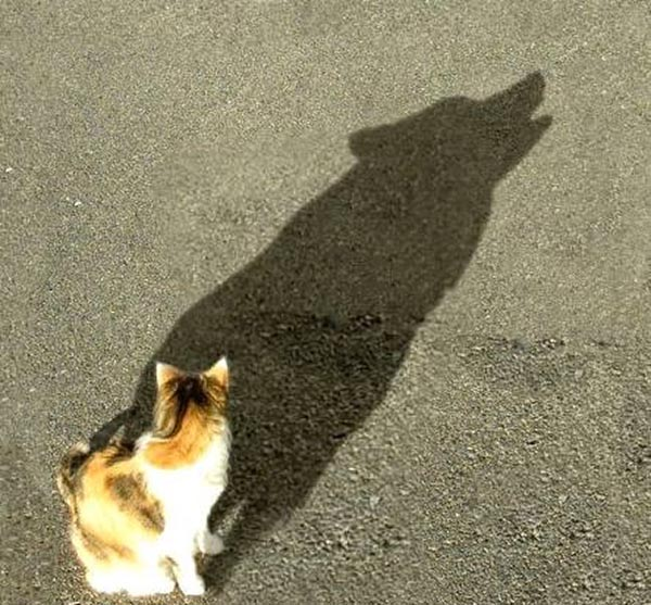Cat with shadow of wolf