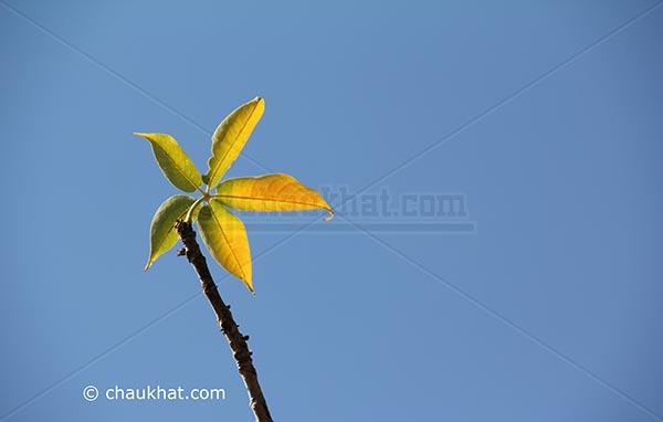 Leaf Fan