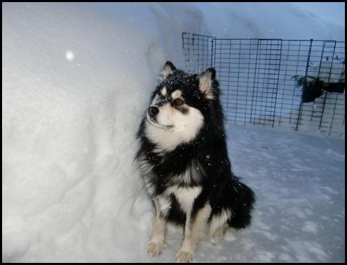 snø febr-10017