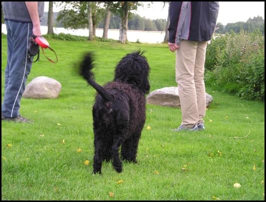 lek med P.vannhund009