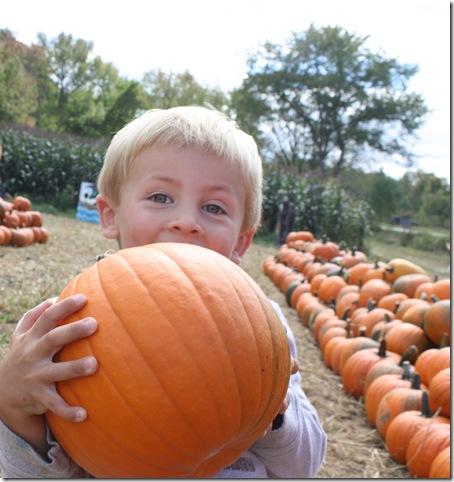 pumpkincoop1