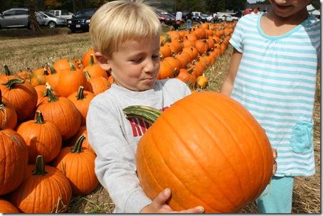pumpkincoop2