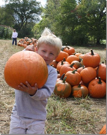 pumpkincoop3