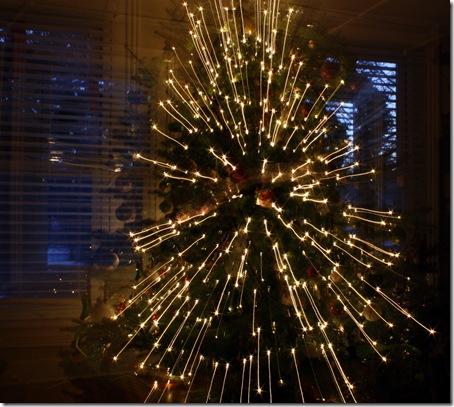 treeraysof light