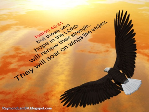 Isaiah 40:31 but those who hope in the LORD will renew their strength. They will soar on wings like eagles
