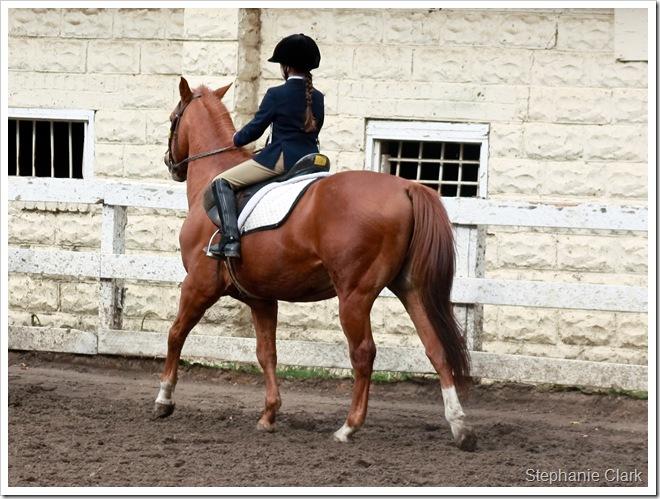Horse show 110109 028e