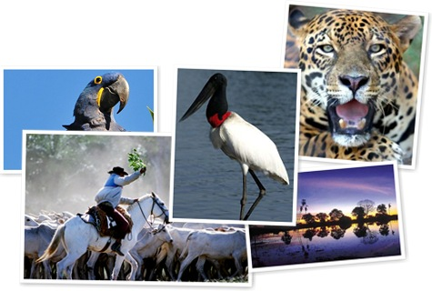Exibir Pantanal