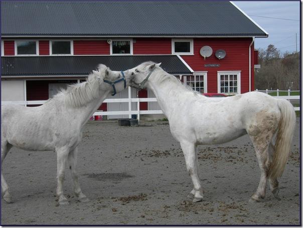 whitehorses3