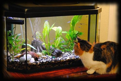 Mitt nye akvarium