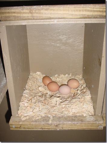 Four Eggs!