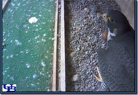 Falcon Web Cam