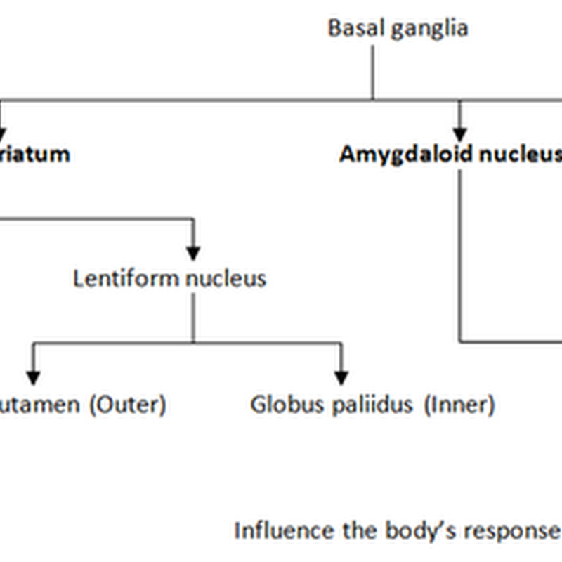 The reticular formation,limbic system and  basal ganglia I