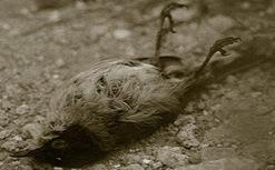 pájaro-muerto-PSHweb