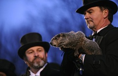 Punxsutawney Phil Makes Appearance Groundhog a6SXixtzt0kl