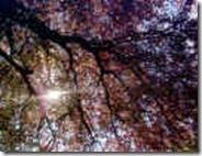 tree01829_small