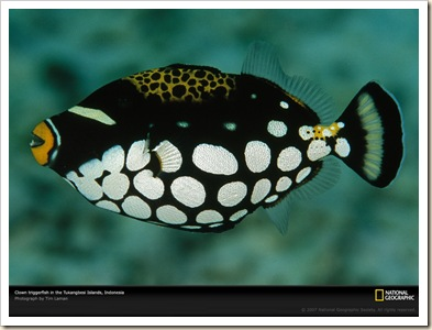 Triggerfish