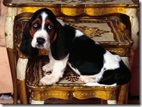 Dogs-wallpapers (162)