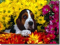 Dogs-wallpapers (156)
