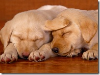 Dogs-wallpapers (149)
