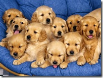 Dogs-wallpapers (147)
