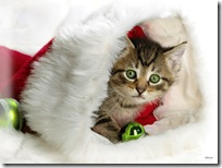 Christmas-new-year-wallpapers (40)