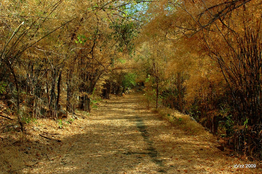 Пейзаж опадающих листьев около храма в Нонг Буа, Канчанабури