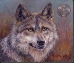 Canis lupus baileyi_mexican wolf_web
