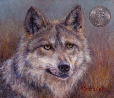 [Canis lupus baileyi_mexican wolf_web[11].jpg]