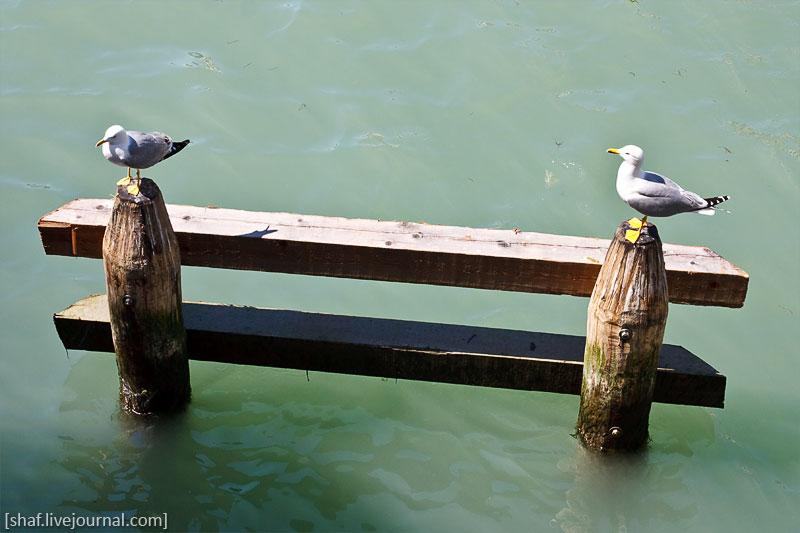 Италия, Венеция, чайки у моста Риальто