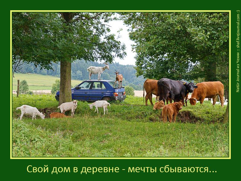 http://lh3.ggpht.com/_p9j-6xLawcI/TTyuq0zXnnI/AAAAAAAAYYw/pcJb32-dvhM/s800/20100807-153011_Morava_d4.jpg