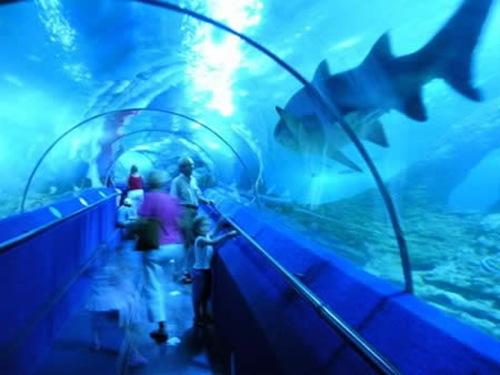 O Aquário da Austrália (Aquarium of Western Australia – AQWA)