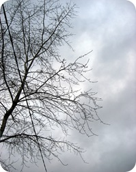 tree_against_grey_sky