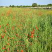 0430 Apulien (03) Kopie.jpg
