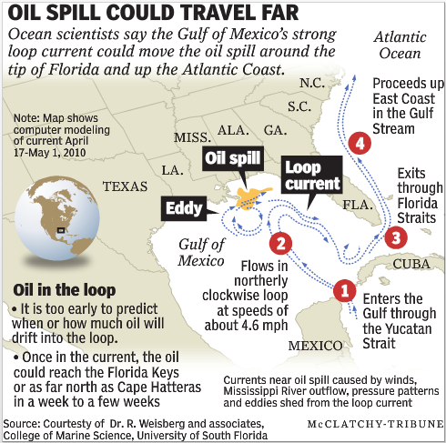 Projected oil spill path. The oil spill from the Deepwater Horizon may be carried by the Gulf of Mexico's strong loop current. McClatchy-Tribune