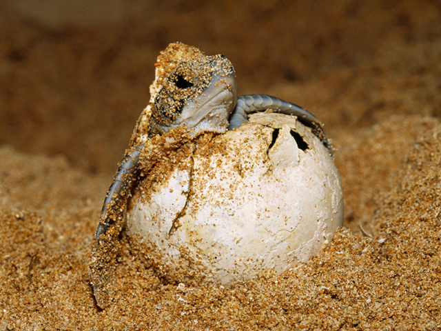 Turtle eggs hatching video